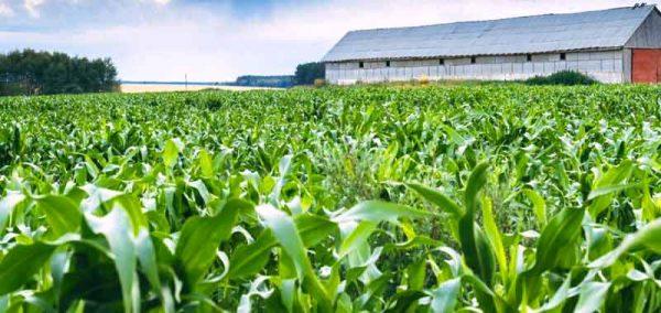 Земеделие, новини, евро субсидии - Agrozona.bg